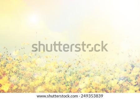 retro flowers field background - stock photo