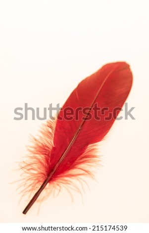 Retro red feather close up - stock photo