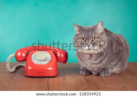 catcall stock photos royaltyfree images  vectors
