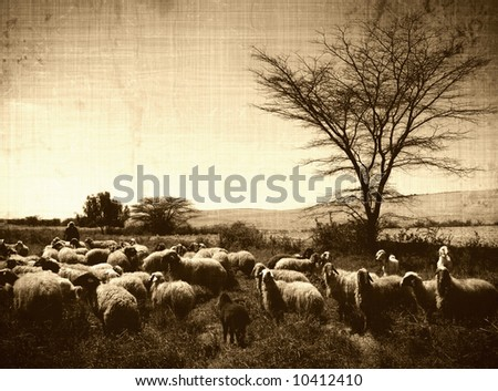 retro sheep - stock photo