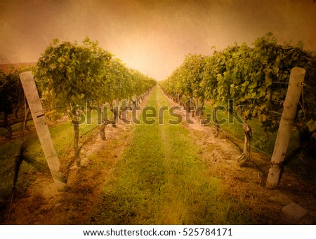 Retro style winery vineyard with vintage tone filter and texture