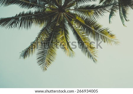 Retro stylized palm tree over sky background - stock photo