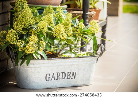 Retro tubs and plants in front of the house. - stock photo