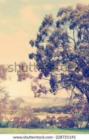 Retro vintage style Australian landscape with large eucalyptus gum tree overlooking farming and vineyard views. - stock photo