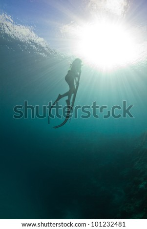 Returning to the surface to breath while spearfishing on the Great barrier reef. - stock photo
