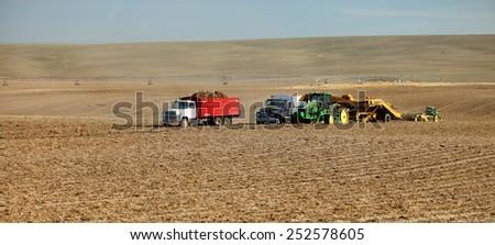 Rexburg, Idaho, USA Oct. 9, 2012- Farmers and field hands use farm machinery in the field harvesting potatoes.   - stock photo
