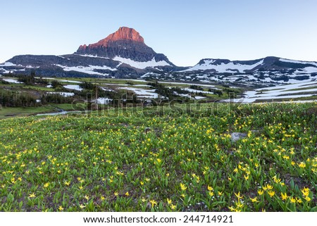 Reynolds Mountain over wildflower field at Logan Pass, Glacier National Park - stock photo