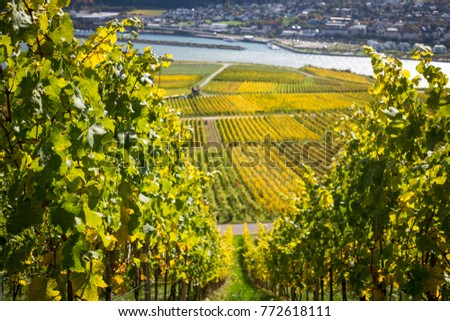 Rhine valley with vineyards. Rudesheim, Germany