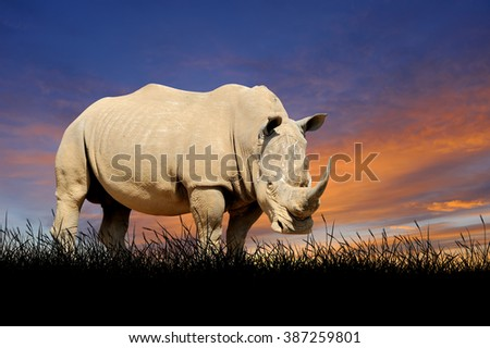 Rhino against on the background of sunset sky - stock photo
