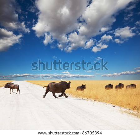 rhino and antelope Gny in Etosha Park - stock photo