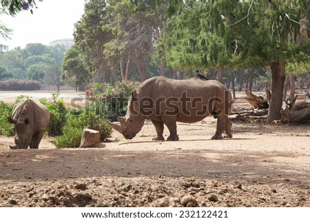 Rhino and crow friends forever - stock photo