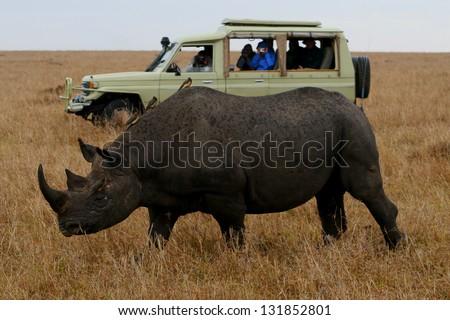 Rhino and Tourist Truck Kenya - stock photo