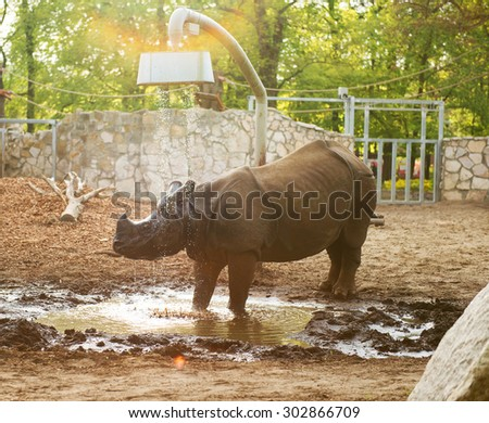 rhino at the zoo take a shower - stock photo