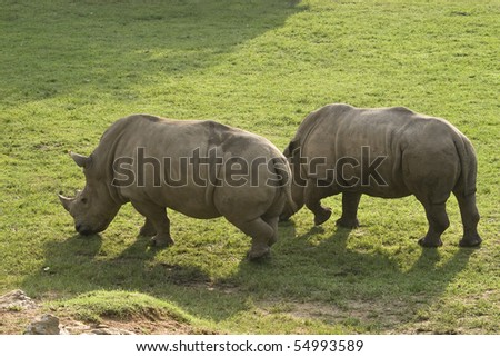 Rhino at Zoo in Thailand - stock photo