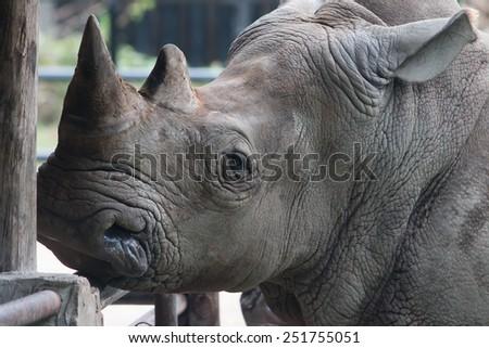 Rhino closeup - stock photo