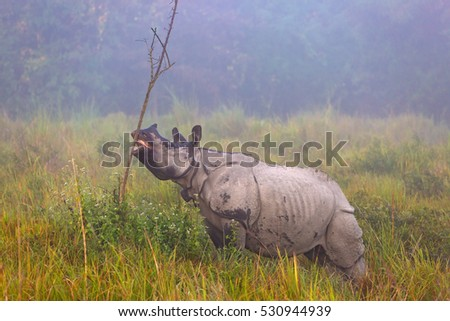Rhino in Kaziranga National Parc in India