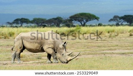 Rhino in the National Reserve of Africa, Kenya - stock photo