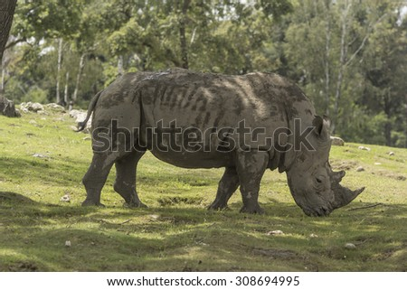 rhino in the natural park under a tree - stock photo