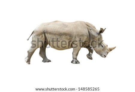 Rhino isolated on white background with clipping path - stock photo