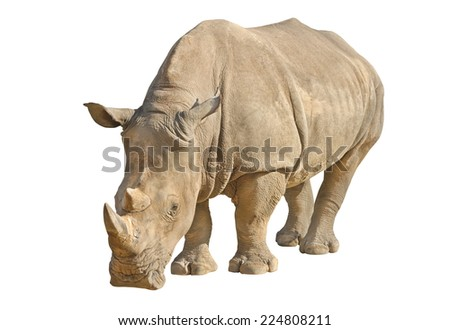 Rhino isolated on white with clipping path - stock photo