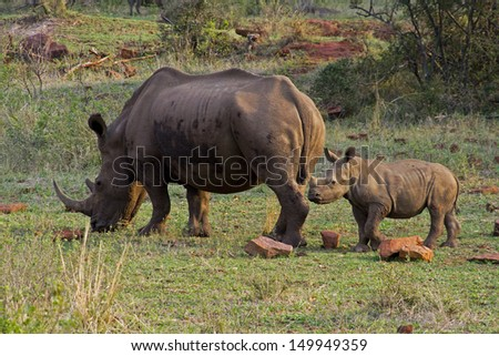 Rhino mother and child - stock photo