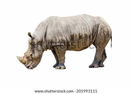 Rhino on white background - stock photo