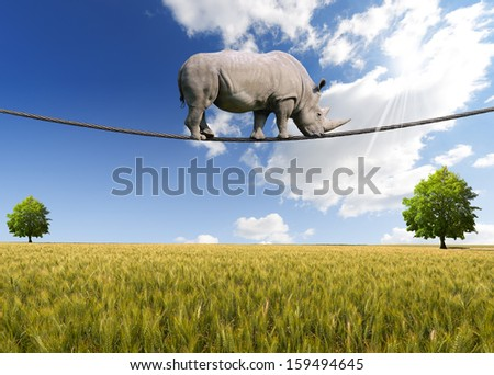 Rhino Walking on Rope / Great white rhino walking on steel cable, blue sky, trees and wheat field on background - stock photo