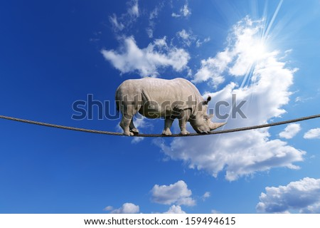Rhino Walking on Rope / Great white rhino walking on steel cable, blue sky with clouds in the background