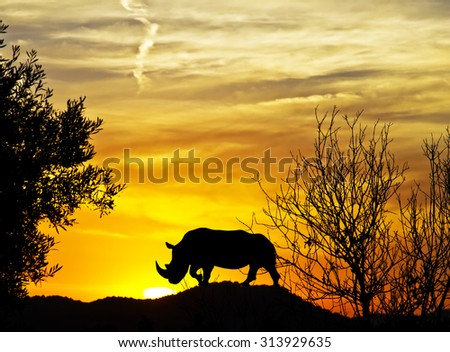 rhinoceros in Africa - stock photo