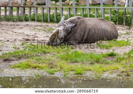 Rhinoceros in the zoo in Kyiv, Ukraine