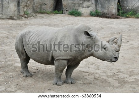 Rhinoceros in the zoo of Indianapolis - stock photo