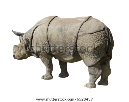 rhinoceros isolated on white background, path include