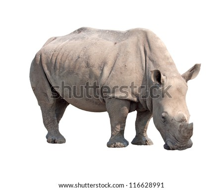 rhinoceros isolated on white background with paths
