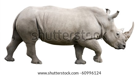 Rhinoceros isolated on white by clipping path - stock photo