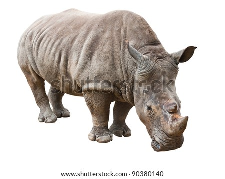 Rhinoceros isolated on white with clipping path