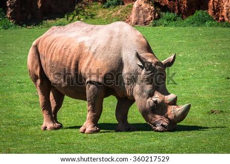 Rhinoceros, Lake Nakuru National Park, Kenya, Ceratotherium - stock photo