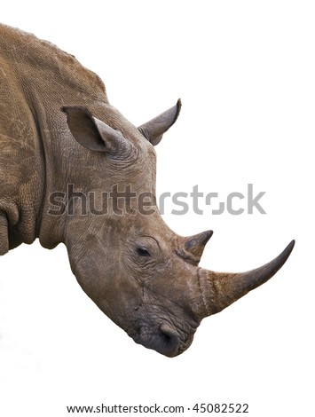 Rhinoceros portrait in front of white background - stock photo