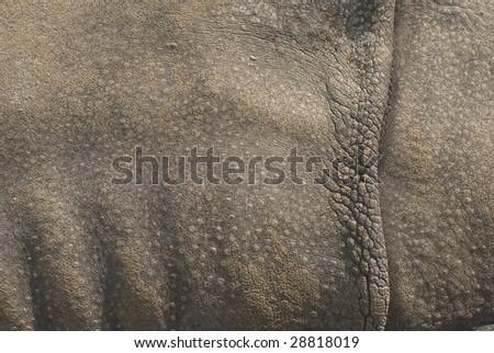 Rhinoceros Skin as an Organic Textural Source - stock photo