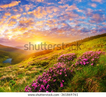 Rhododendron - stock photo
