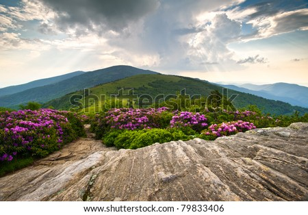 Rhododendron Bloom on Blue Ridge Appalachian Trail Roan Mountains Peaks scenic landscape - stock photo
