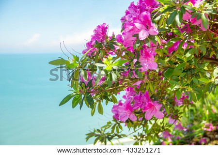 rhododendron flowers over sea background - stock photo