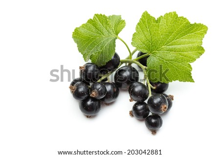 Ribes nigrum (Blackcurrant) fruit and leaves - stock photo