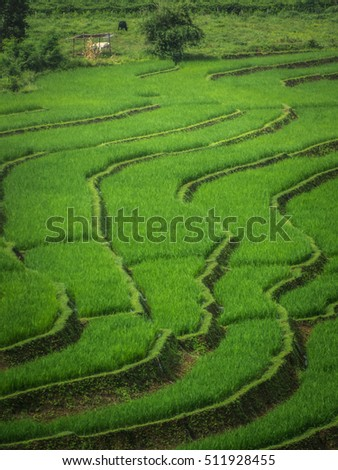 rice and green