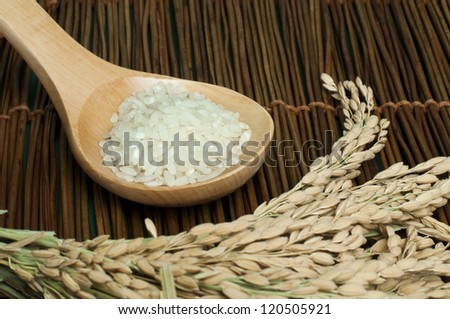 Rice baldo in wooden spoon on wooden base. Rice branch - stock photo