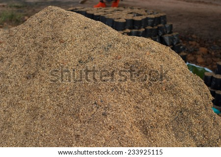 Rice chaff. - stock photo