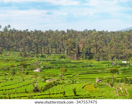Rice, corn and other crops grow in teraced plots, with a coconut plantation on the hills in the background, in Southeast Asia. - stock photo