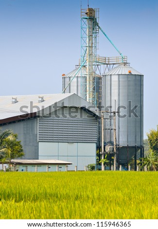 Rice crop and Rice mill over blue sky - stock photo
