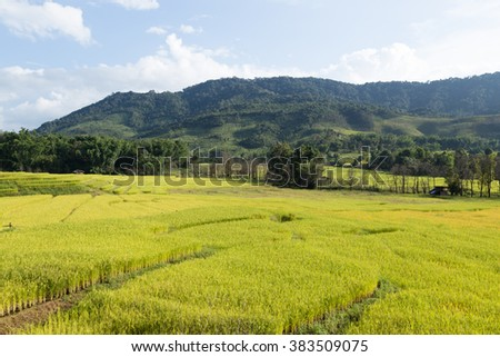 Rice farm on the mountain Agricultural cultivation on the mountain. The mountains and forests - stock photo