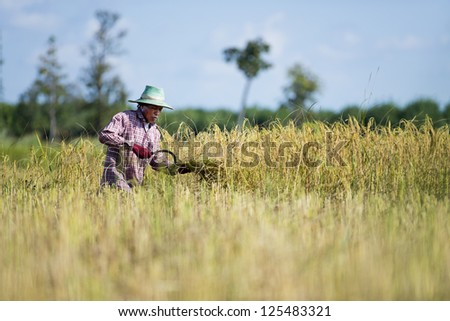 rice farmer in thailand working in the fields - stock photo