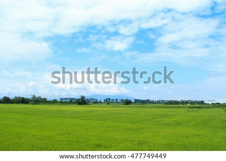 rice field and beautiful sky in daylight
